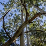 Remoción de árboles caídos