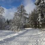 Winter Driving Tactics