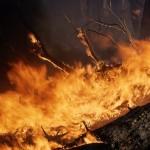 Proteccion Contra Incendios de Equipo Maderero