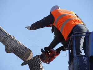 Tree Harvesting and Felling